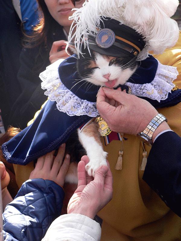 japon tama chat chef de gare tamaden